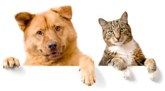 домашние питомцы собака и кошка