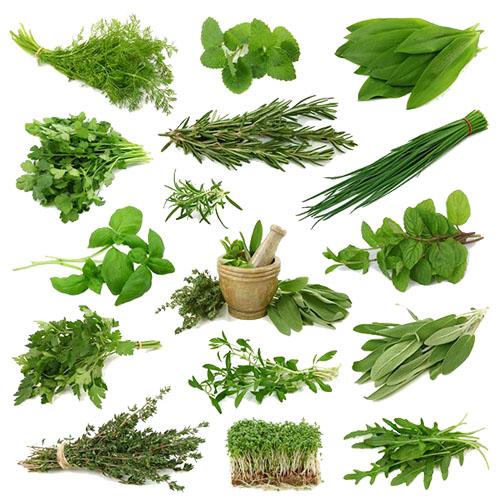 пряные травы, какие можно выращивать на подоконнике