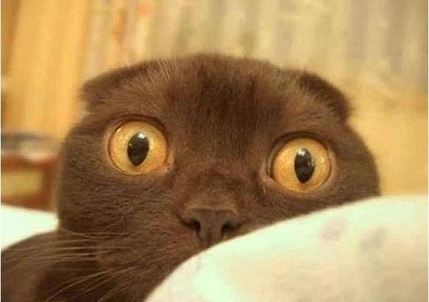 напуганный кот, фобии и страхи
