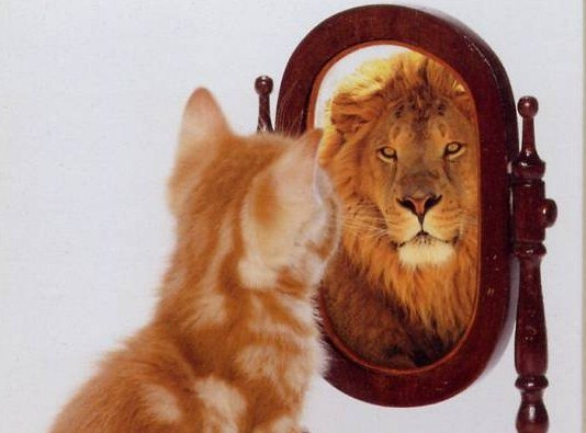 самооценка, что на нее влияет, кот в зеркале лев