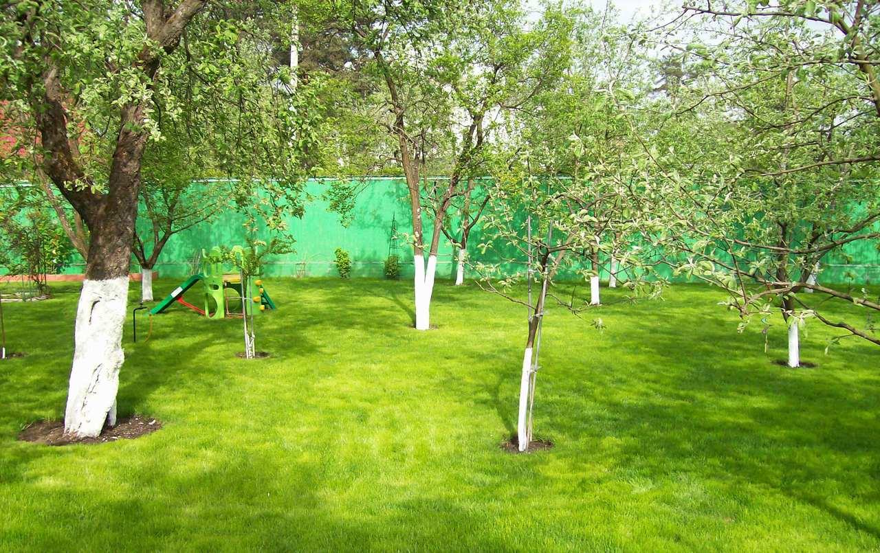 деревья на даче, побелка плодовых деревьев, как правильно проводится