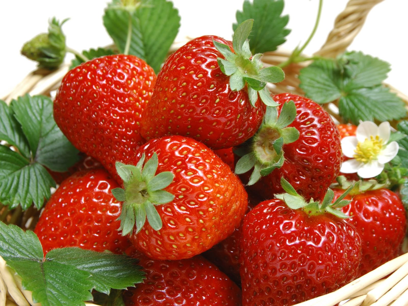 выбор клубники, хорошая и спелая, красивая, ярко-красная ягода