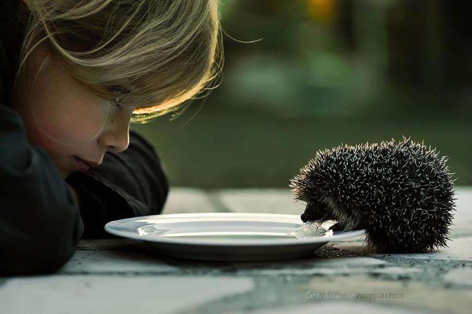 доброта, помните о хорошем, ребенок и ежик
